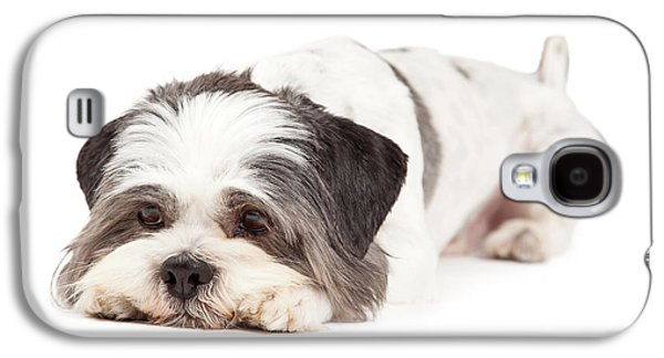Studio Photographs Galaxy S4 Cases - Guilty Looking Lhasa Apso Dog Laying Galaxy S4 Case by Susan  Schmitz