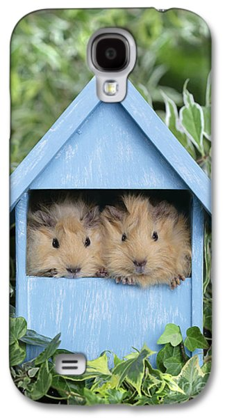 Guinea Pig In House Gp104 Galaxy S4 Case by Greg Cuddiford