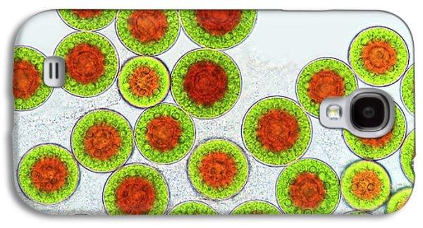 Haematococcus Algae Galaxy S4 Case by Marek Mis
