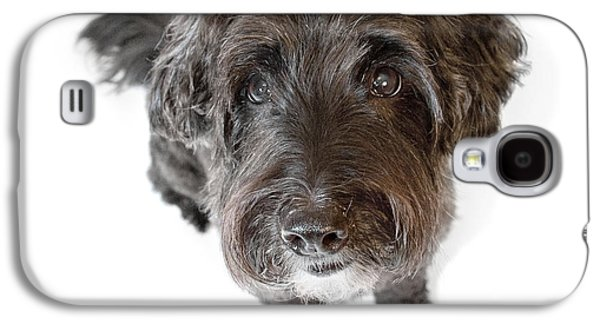 Pups Digital Art Galaxy S4 Cases - Hairy Dog Photographic Caricature Galaxy S4 Case by Natalie Kinnear