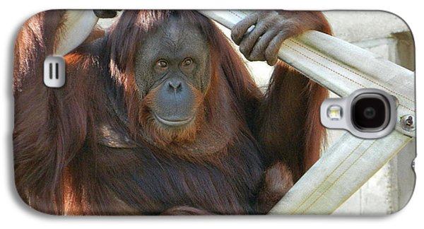 Hanging Out - Melati The Orangutan Galaxy S4 Case by Emmy Marie Vickers