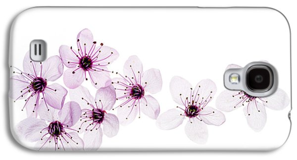 Cherry Blossoms Galaxy S4 Cases - Happy Spring Galaxy S4 Case by Rebecca Cozart
