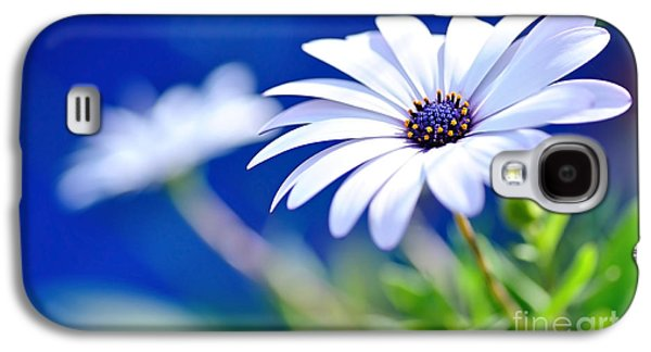 Light Galaxy S4 Cases - Happy White Daisy 2- Blue Bokeh  Galaxy S4 Case by Kaye Menner