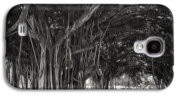 Tree Roots Photographs Galaxy S4 Cases - Hawaiian Banyan Tree Root Study Galaxy S4 Case by Daniel Hagerman