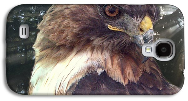 Statue Portrait Galaxy S4 Cases - Hawk Eye - Wildlife Art Photography Galaxy S4 Case by Ella Kaye Dickey