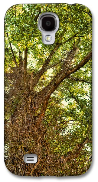 Creepy Galaxy S4 Cases - Tree Roots Galaxy S4 Case by Wim Lanclus