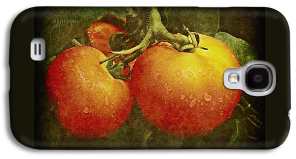 Amish Photographs Galaxy S4 Cases - Heirloom Tomatoes  Galaxy S4 Case by Chris Berry