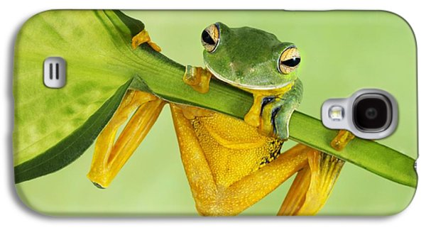 Flying Frog Galaxy S4 Cases - Helens tree frog  Galaxy S4 Case by Lisa Cuchara