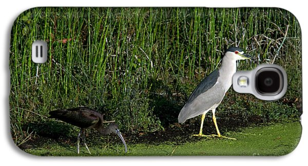 Heron And Ibis Galaxy S4 Case by Mark Newman