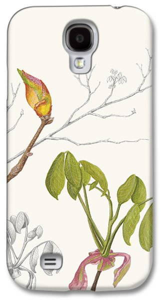 Nature Study Drawings Galaxy S4 Cases - Hickory Buds Galaxy S4 Case by Tammy Liu-Haller
