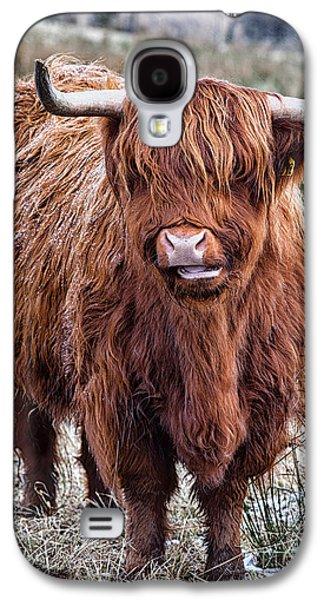 Snowy Day Galaxy S4 Cases - Highland Coo Galaxy S4 Case by John Farnan