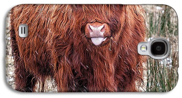 Snowy Day Galaxy S4 Cases - Highland Coo with tongue out Galaxy S4 Case by John Farnan