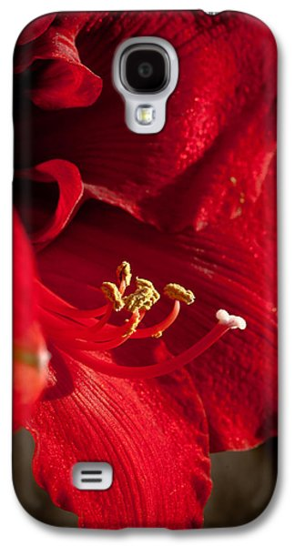 Genus Galaxy S4 Cases - Hippeastrum Galaxy S4 Case by Ralf Kaiser