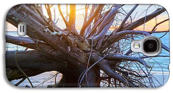 Tree Roots Galaxy S4 Cases - Historic Roots Galaxy S4 Case by Betsy A  Cutler