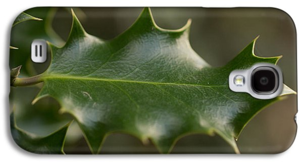 Nature Photographs Galaxy S4 Cases - Holly Leaf Galaxy S4 Case by Robert Carr