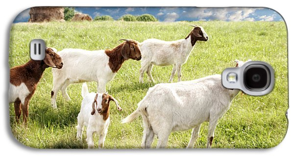 Pasture Scenes Photographs Galaxy S4 Cases - Homeward Bound Galaxy S4 Case by Amy Tyler
