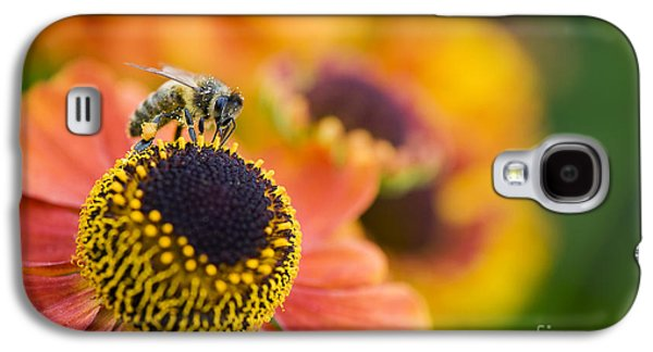 Filament Galaxy S4 Cases - Honey Bee on Helenium Galaxy S4 Case by Tim Gainey