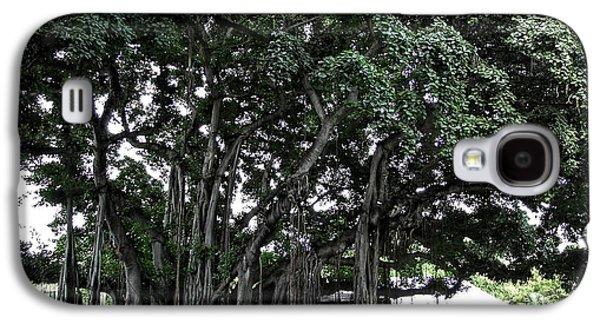 Tree Roots Galaxy S4 Cases - Honolulu Banyan Tree Galaxy S4 Case by Daniel Hagerman