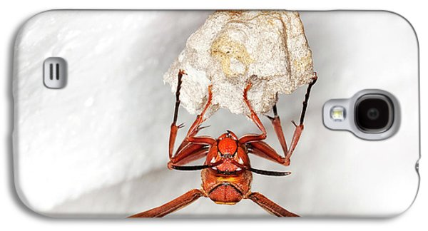 Hornet Preparing Paper Nest Galaxy S4 Case by Natural History Museum, London