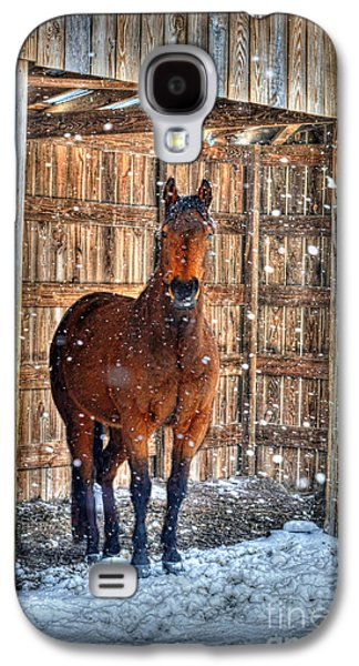 Dan Friend Galaxy S4 Cases - Horse and snow storm Galaxy S4 Case by Dan Friend