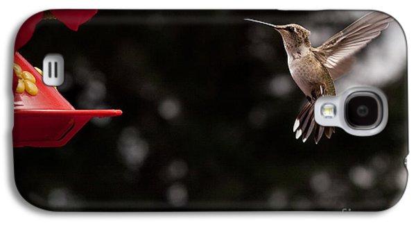 Hummingbird At Feeder Galaxy S4 Case by Cindy Singleton
