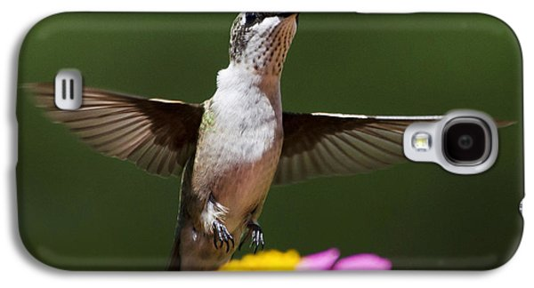 Flying Animal Galaxy S4 Cases - Hummingbird Galaxy S4 Case by Christina Rollo