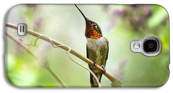 Rollosphotos Digital Art Galaxy S4 Cases - Hummingbird Looking for Love Galaxy S4 Case by Christina Rollo