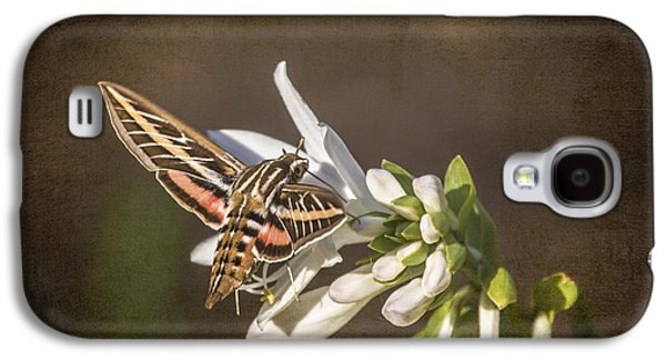 Jeff Swanson Galaxy S4 Cases - Hummingbird Moth Galaxy S4 Case by Jeff Swanson