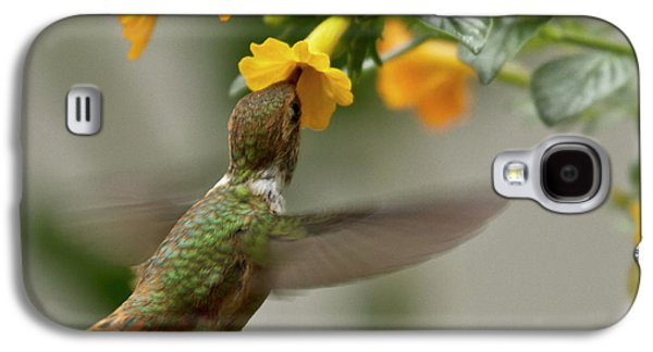 Flying Animal Galaxy S4 Cases - Hummingbird sips Nectar Galaxy S4 Case by Heiko Koehrer-Wagner