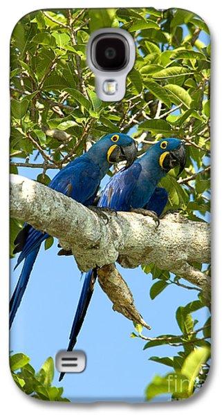 Hyacinth Macaws Brazil Galaxy S4 Case by Gregory G Dimijian MD