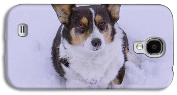 Dogs Digital Galaxy S4 Cases - I Do Not Like Snow Galaxy S4 Case by Mike McGlothlen