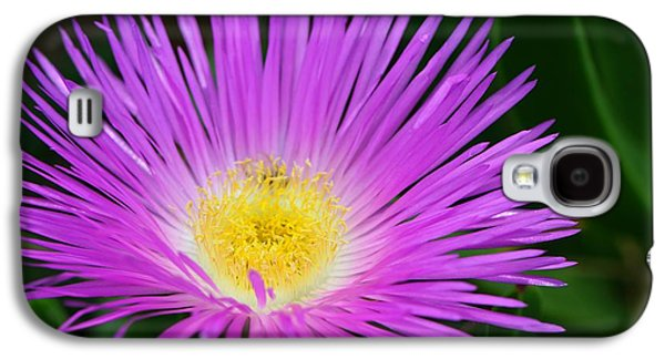 Gardening Photography Galaxy S4 Cases - Ice Ice Baby - Flower Photography by Sharon Cummings Galaxy S4 Case by Sharon Cummings