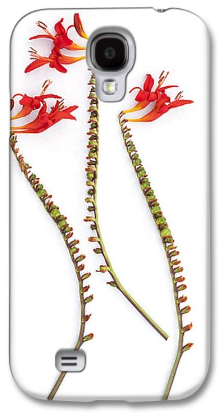 If Seahorses Were Flowers Galaxy S4 Case by Carol Leigh