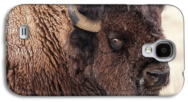 Bison Digital Galaxy S4 Cases - In the Presence of  Bison - 2 Galaxy S4 Case by OLena Art
