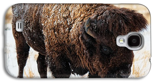 Bison Digital Galaxy S4 Cases - In the Presence of  Bison - 5 Galaxy S4 Case by OLena Art