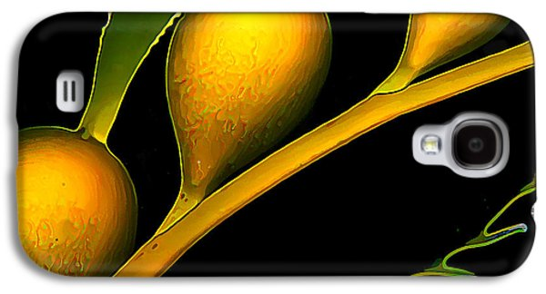 Photo Manipulation Galaxy S4 Cases - Incandescent Kelp 2 Galaxy S4 Case by Bill Caldwell -        ABeautifulSky Photography