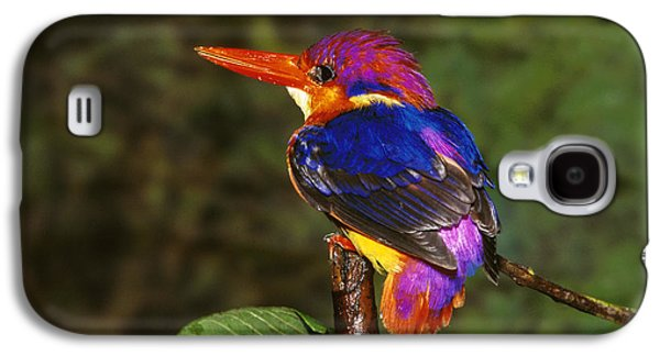 India Three Toed Kingfisher Galaxy S4 Case by Anonymous