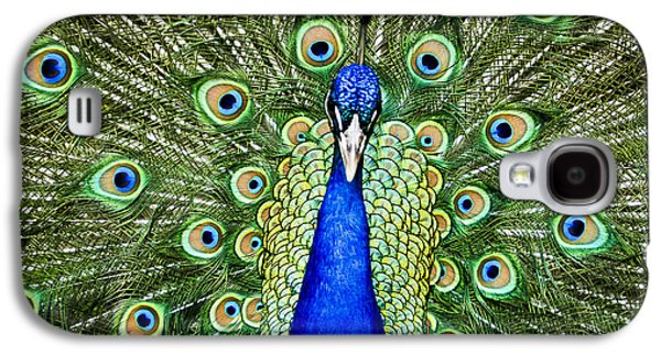 Animal Pyrography Galaxy S4 Cases - Indian Peafowl Galaxy S4 Case by PointShoot Photography By Mario Gozum