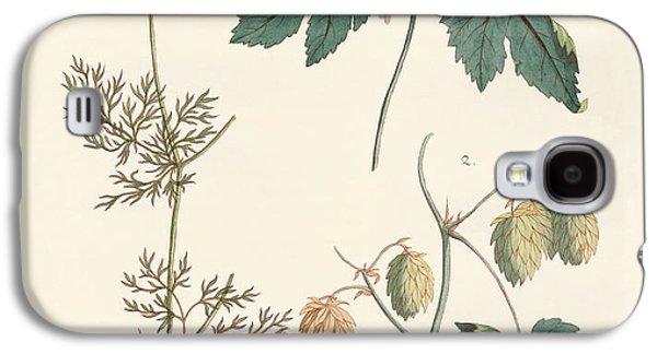 Hop Drawings Galaxy S4 Cases - Indigenous spice plants Galaxy S4 Case by Splendid Art Prints