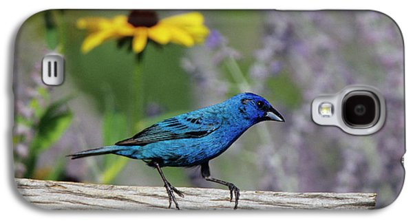 Indigo Bunting (passerina Cyanea Galaxy S4 Case by Richard and Susan Day