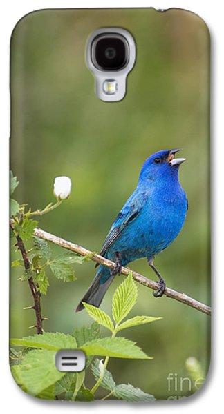 Indiana Flowers Galaxy S4 Cases - Indigo II - D009001 Galaxy S4 Case by Daniel Dempster