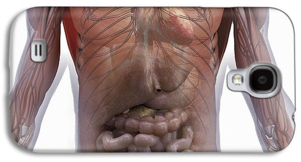 Internal Organs Galaxy S4 Cases - Internal Human Anatomy Galaxy S4 Case by Science Picture Co