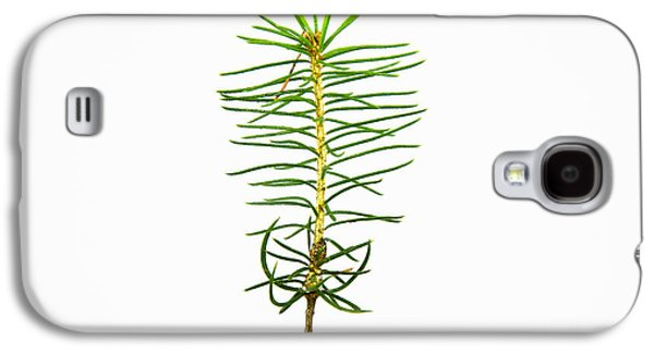 Spring Greening Galaxy S4 Cases - Isolated Spruce seedling Galaxy S4 Case by Kennerth and Birgitta Kullman