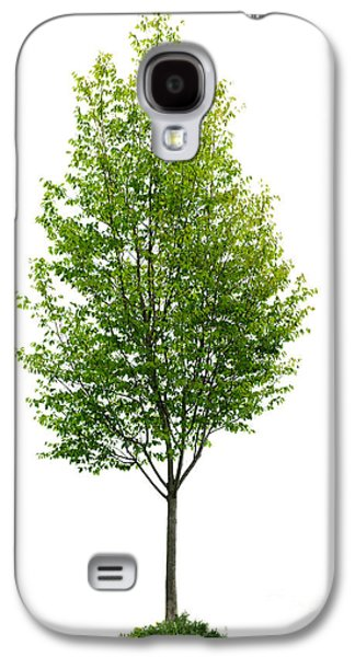 Trees Photographs Galaxy S4 Cases - Isolated young tree Galaxy S4 Case by Elena Elisseeva