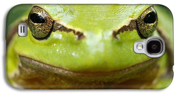 Frogs Photographs Galaxy S4 Cases - Its Not Easy Being Green _ Tree Frog Portrait Galaxy S4 Case by Roeselien Raimond
