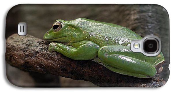 Flying Frog Galaxy S4 Cases - Its Not Easy Being Green Galaxy S4 Case by Barbara McMahon