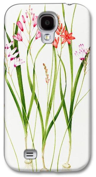 Tasteful Art Galaxy S4 Cases - Ixia  Galaxy S4 Case by Sally Crosthwaite