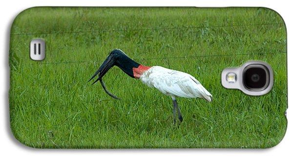 Jabiru Stork Swallowing An Eel Galaxy S4 Case by Gregory G. Dimijian, M.D.
