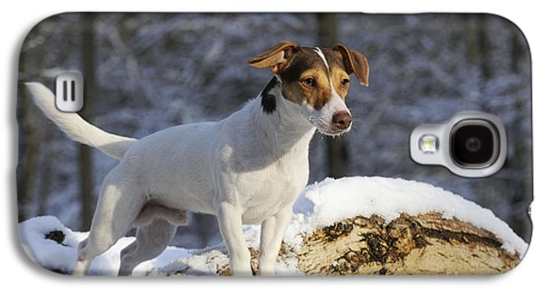 Dogs In Snow. Galaxy S4 Cases - Jack Russell Terrier In Snow Galaxy S4 Case by John Daniels