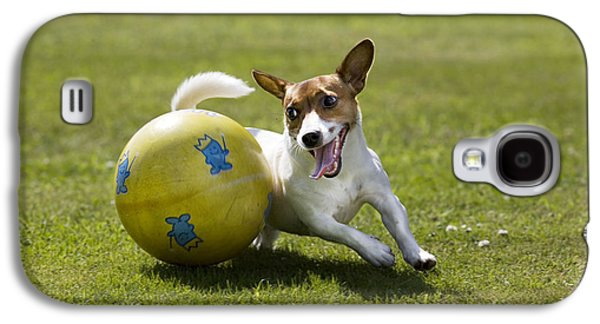 Dog Playing Ball Galaxy S4 Cases - Jack Russell Terrier Plays With Ball Galaxy S4 Case by Johan De Meester